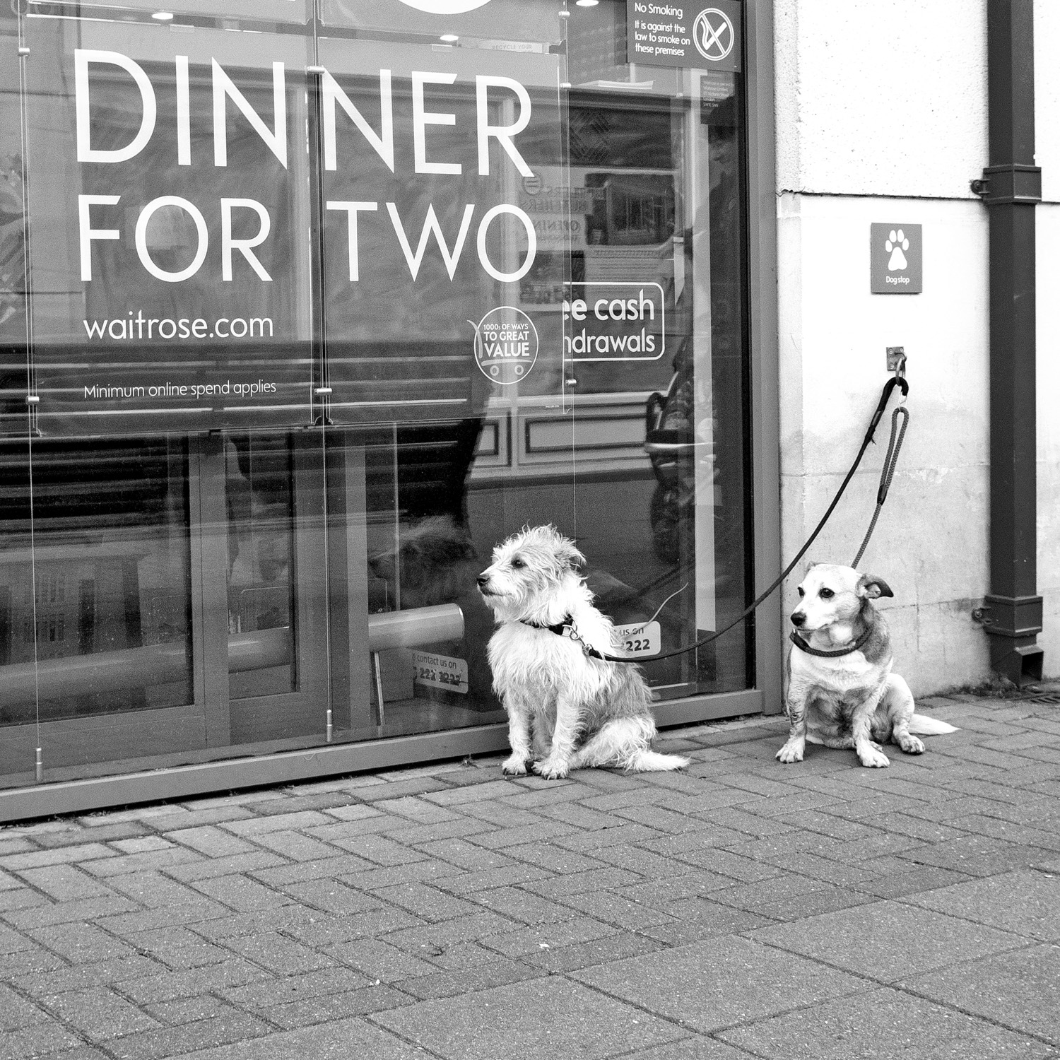 Two dogs waiting outside a supermarket. In the window, an advert reads 'Dinner for two'